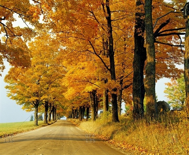 Road In Autumn, Eastern Townships, Quebec, Canada