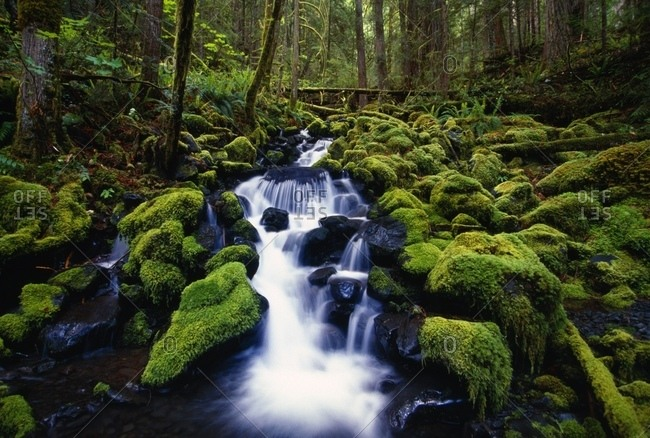 Moss-Covered Rocks In Creek With Small Waterfall, Olympic National Park, Washington, Usa