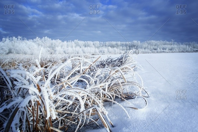 A White Winter Scene
