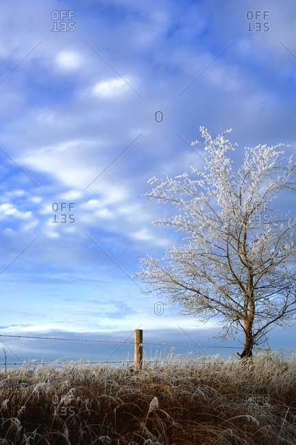 A Frosty Tree - Offset Collection