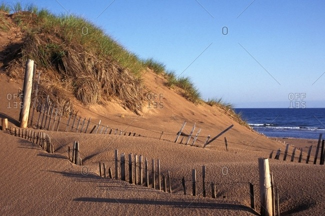 Sand Dunes And Shore