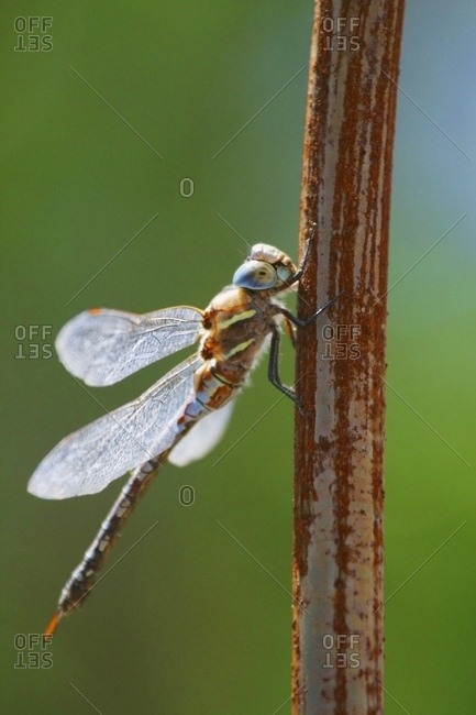 Dragonfly; Vancouver Island, British Columbia, Canada