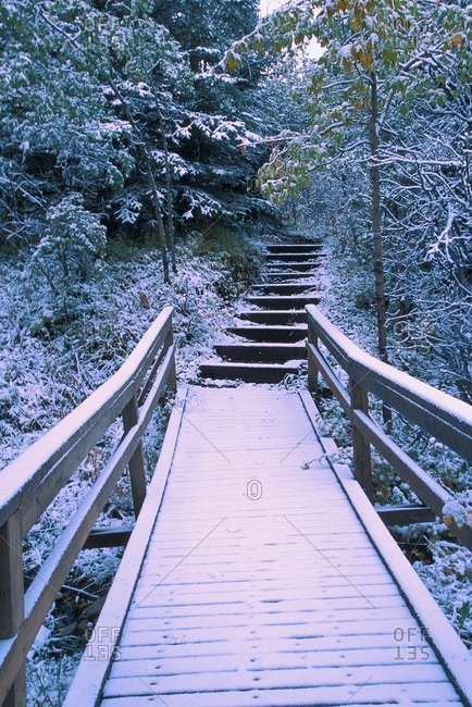 Wood Bridge In Winter