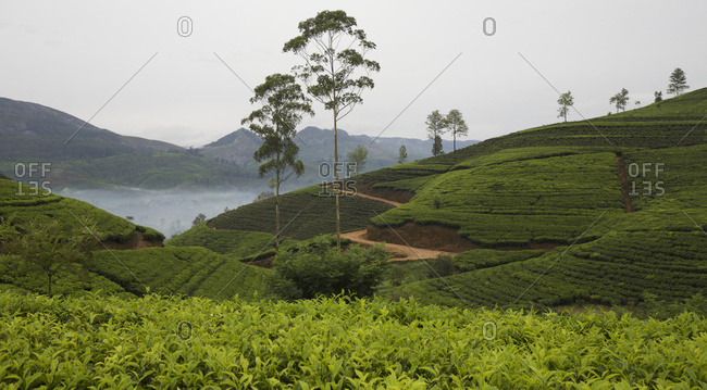 Tea plantation and Hill Country landscape with lake view, Central Sri Lanka