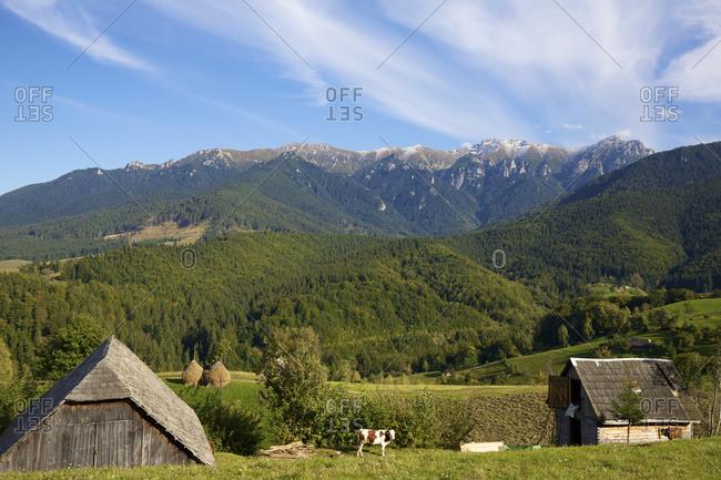 Rural landscape with farm buildings in Carpathian mountains