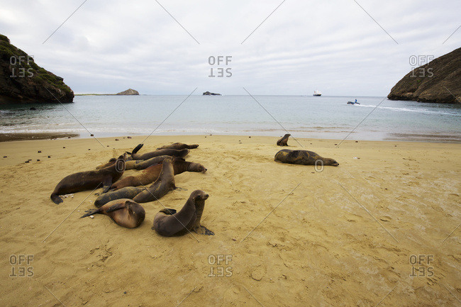 Sea lions on golden sand beach with rocky promontories