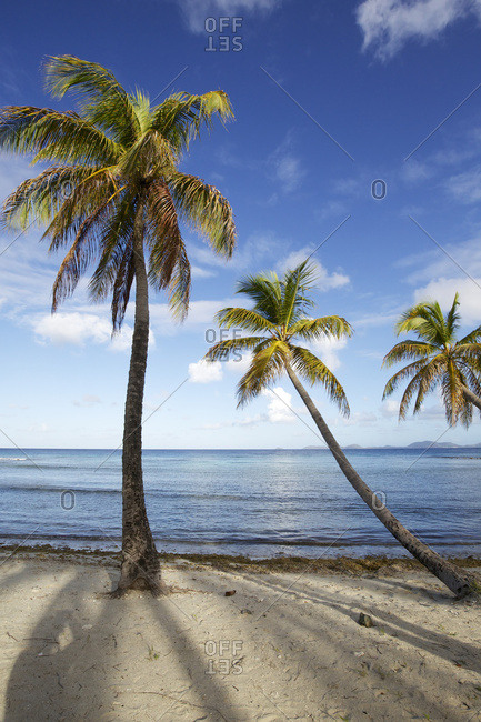 Palm tress arching over the sea on white sand beach
