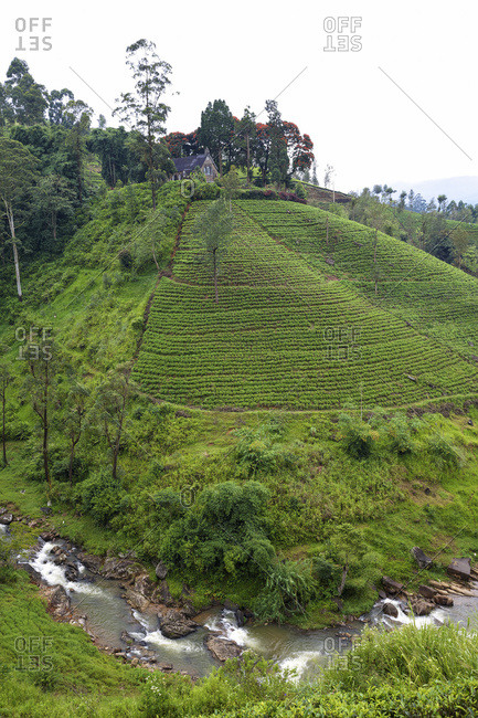 British era church and graveyard set on a hill surrounded by tea plantation and river