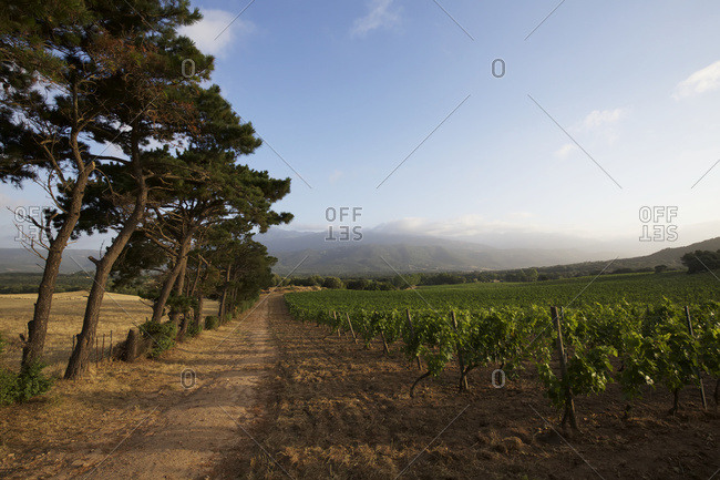 Rural vineyard bordered by trees and hills