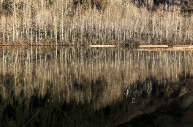 A reflection of leafless trees in a pond next to the Seward Highway south of Girdwood, South-central Alaska, autumn, USA