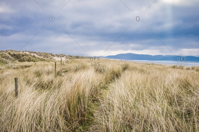 The sand dunes along Inch Beach in the Dingle Peninsula; County Kerry, Ireland