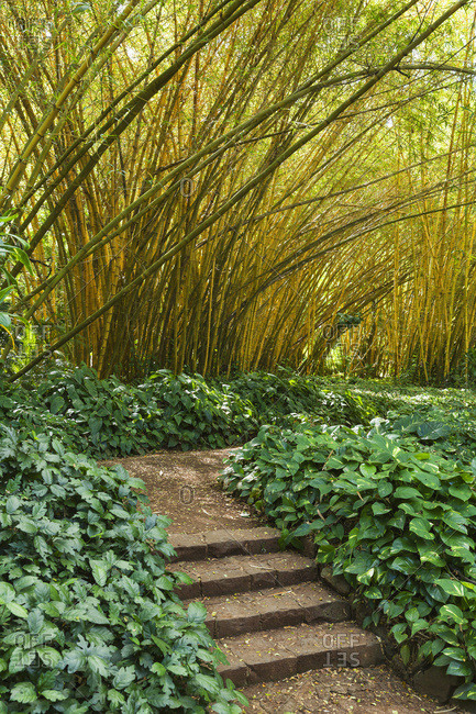 Bamboo Room in Allerton Garden, part of National Botanical Garden near Poipu; Kauai, Hawaii, United States of America