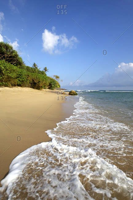 Golden sand beach fringed by palm trees