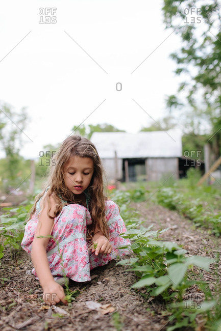 Girl picking weeds in garden