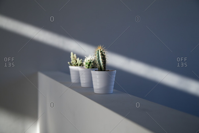 Cactus plants on a wall by sunlight