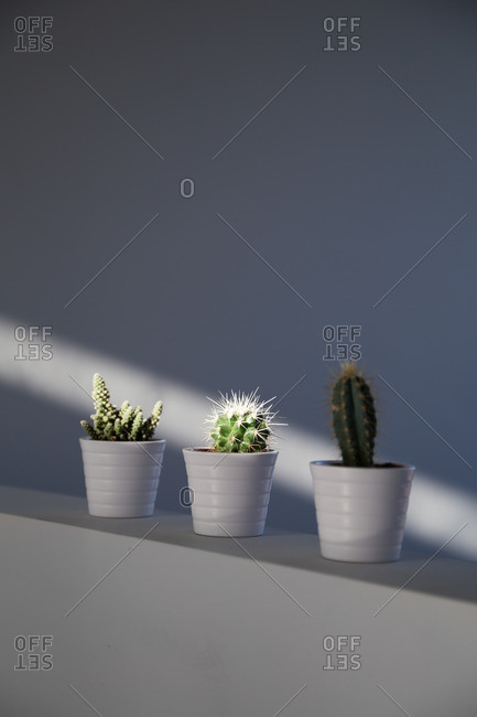 Cactus plants on wall in shaft of light