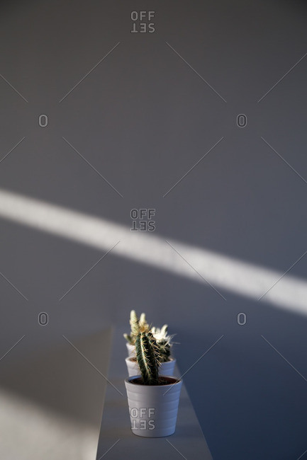 Cactus plants on wall by shaft of light