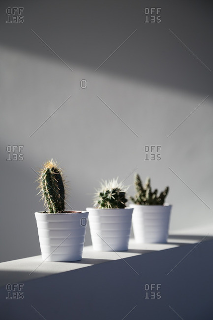 Cactus plants on wall in beam of light