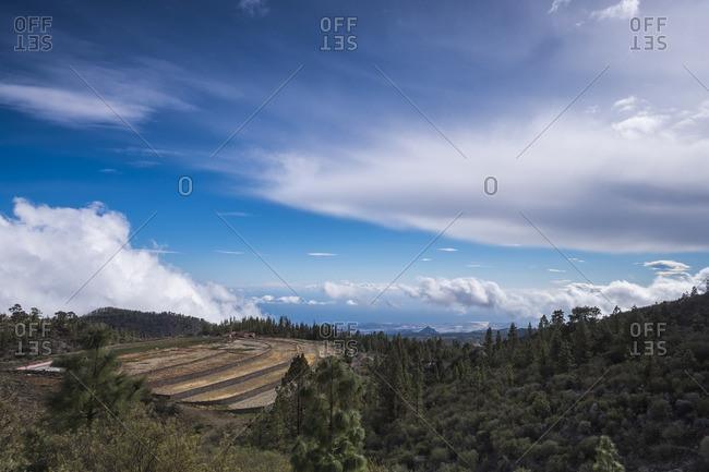 Forest in rural hills, Tenerife, Spain