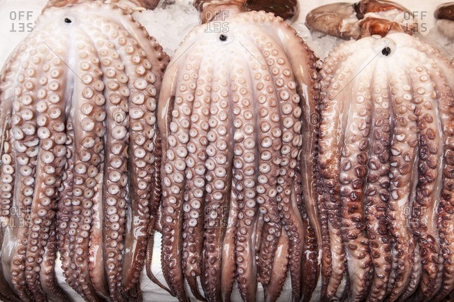 Close-up of giant octopus for sale in Jagalchi seafood market, Busan Korea.