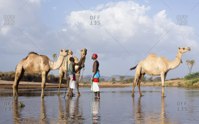 Samburu tribesmen, watering their camels in river, Kenya