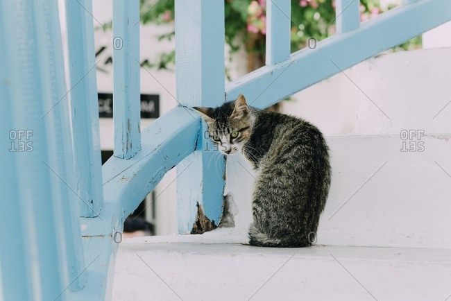 Cat sitting on white stairs