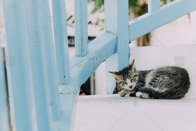 Cat relaxing on white stairs