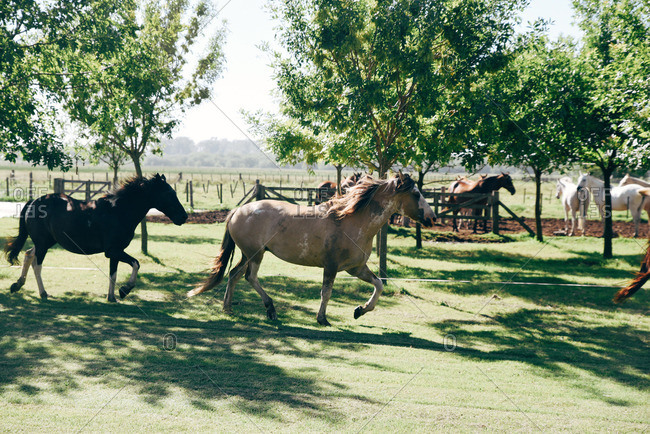 Horses running in a pasture