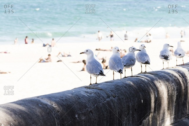 Seagulls standing on cement wall at beach