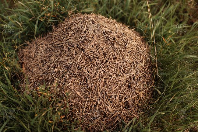 A mound of dry sticks