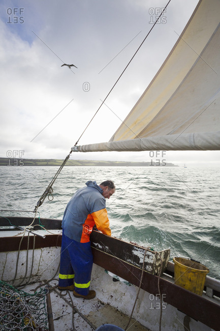 Traditional sustainable oyster fishing A fisherman on a sailing boat sorting the oyster catch