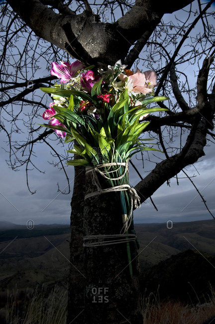 Flowers bouquet attached to a tree to remember those who died on the road, Spain