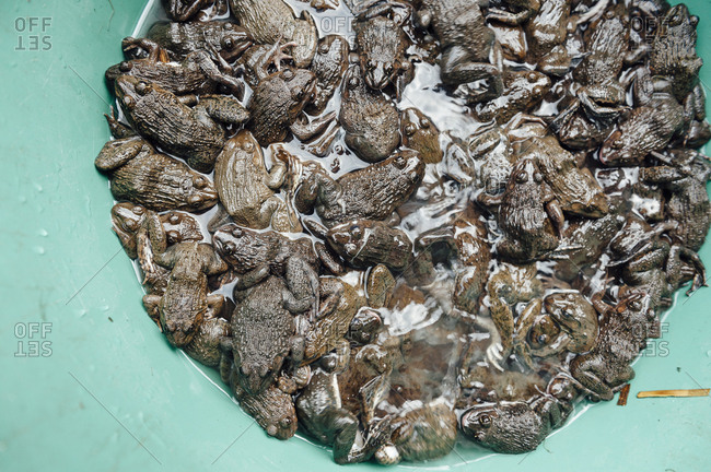 Little frogs ready to be sold in a typical market of Tha Kaek, Laos