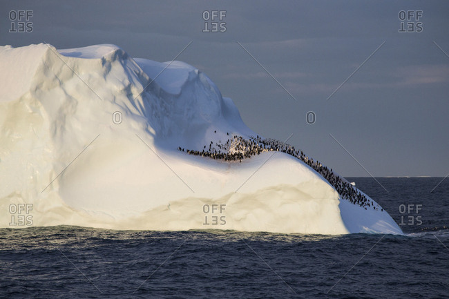 Hundreds of penguins cling to the side of an iceberg in Antarctica