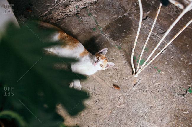 High angle view of an orange and white cat lying on the ground