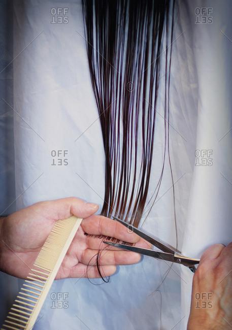 Hairdresser cutting long stylist hair scissors