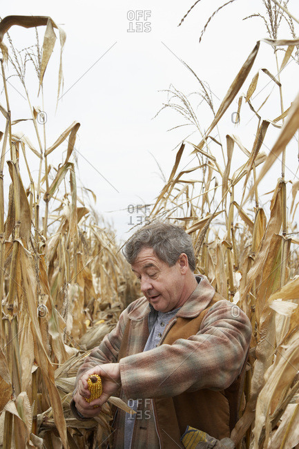 Farmer Checking Corn - Offset Collection