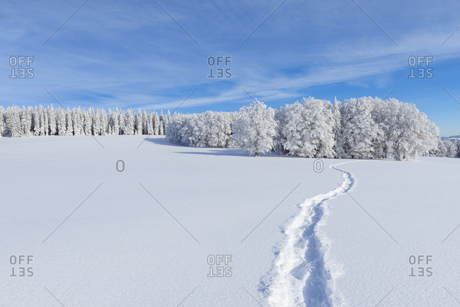Snow Covered Winter Landscape with Snowshoe Trail, Schauinsland, Black Forest, Freiburg im Breisgau, Baden-Wurttemberg, Germany