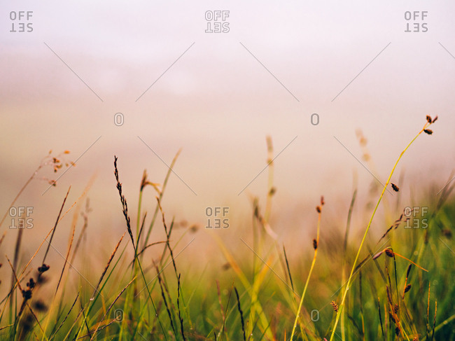 Small dried plants in the foggy meadow.