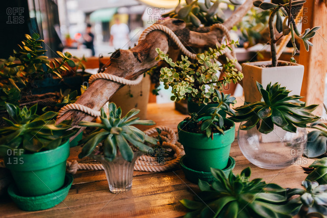 Horizontal indoors shot of the different plants on the wooden table.