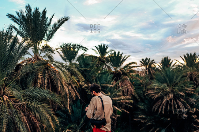 Back view of a person standing in the dried palms.