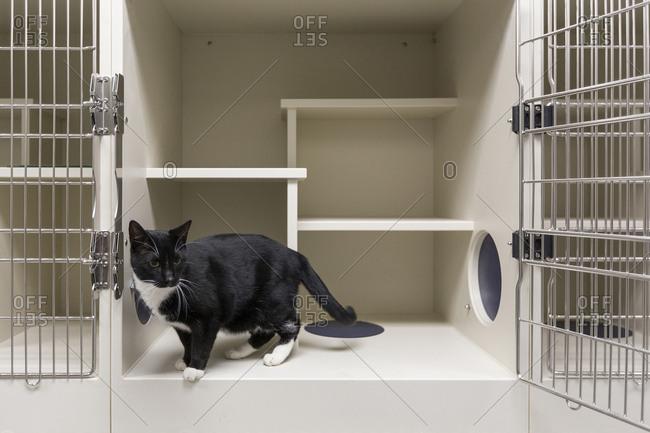 Cat in open cage in animal shelter