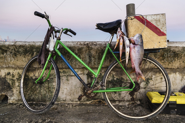 Fish hanging from bicycle on dock