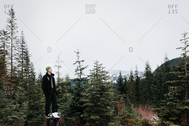 Man standing on a tree stump looking at trees in a forest