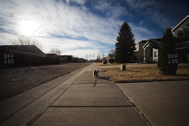 Dog alone on neighborhood sidewalk