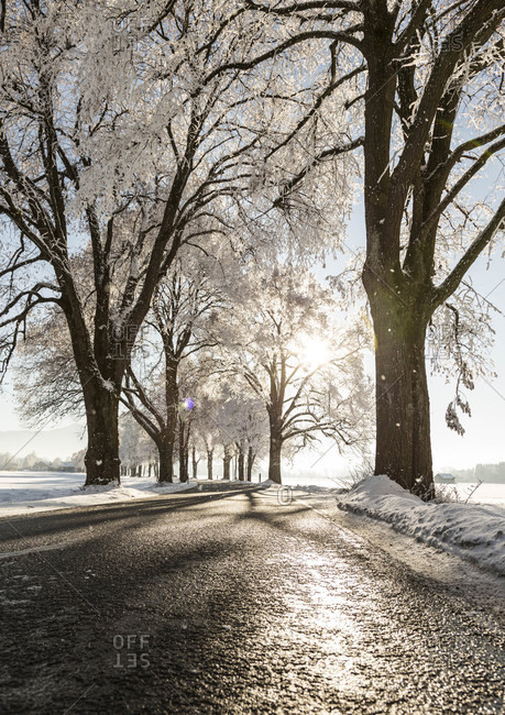 Tree-lined road in winter
