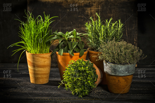 Flowerpots with various fresh herbs on dark wood