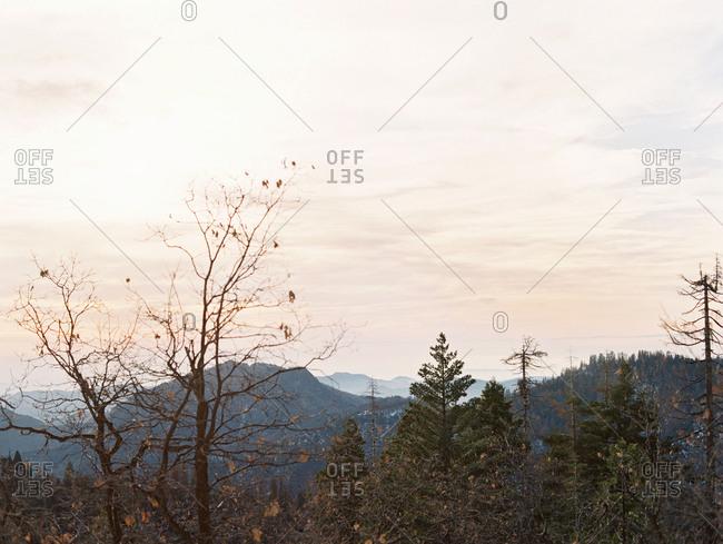 Treetops and mountain peaks at sunrise