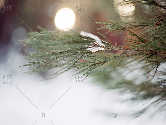 Evergreen branch in snow and orbs of light