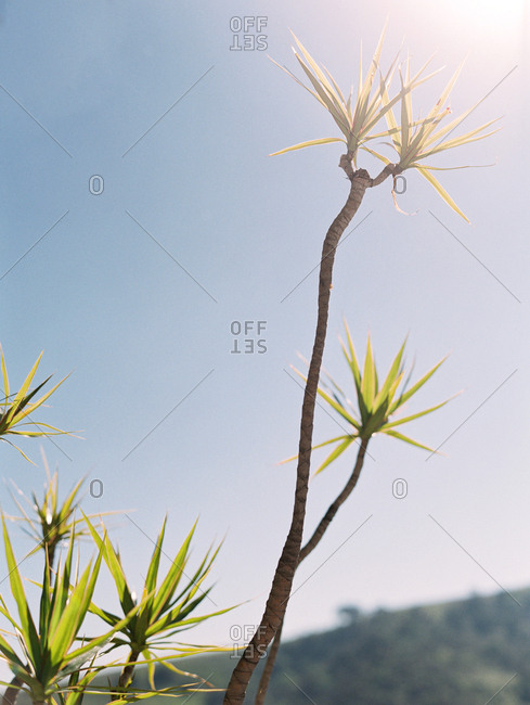 Long branch of a plant extending toward sunlight